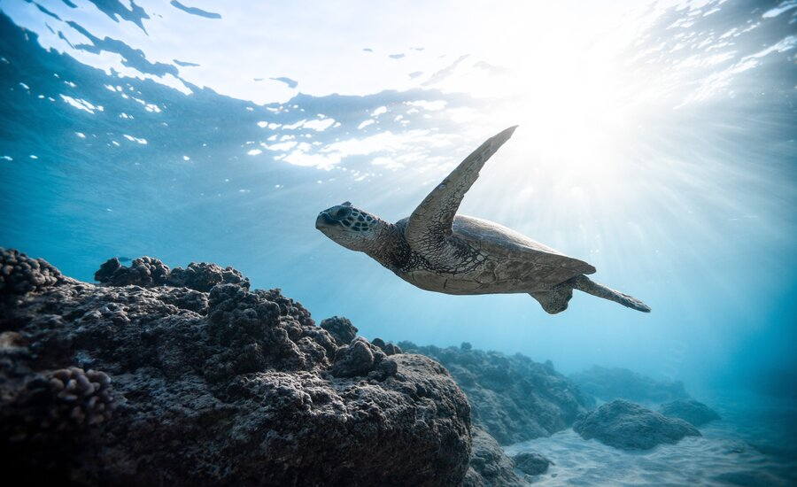 'Life Below Water': An agenda for sustainable development of the oceans