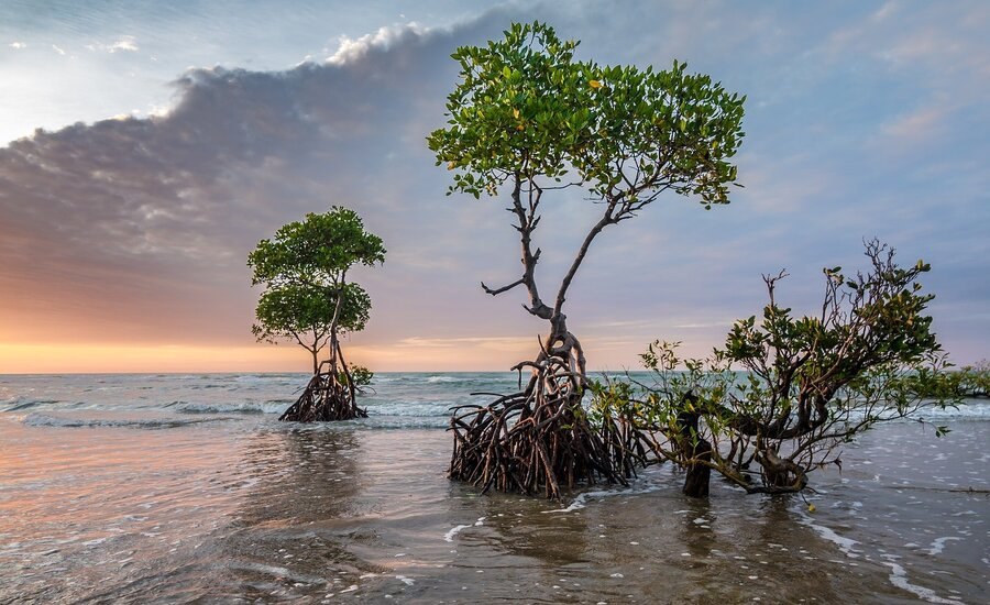 Mangroves and climate change