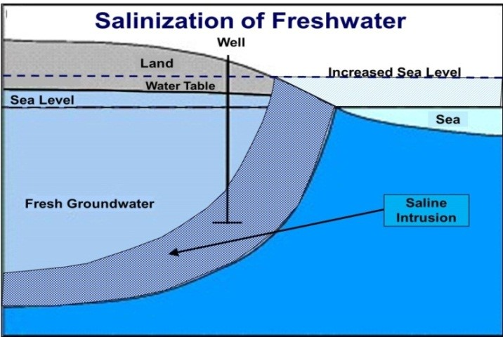 Immediate impact of sea-level rise on the salinization of freshwater